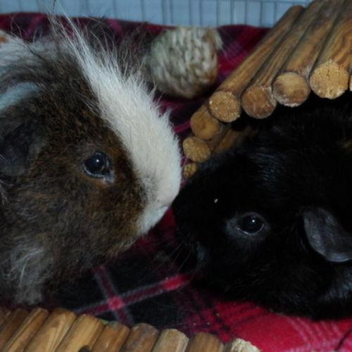 Pet Care Provider Jeane Ruddy Gallery Image 2