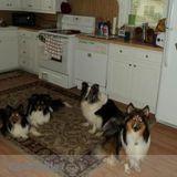 Dog Walker, Pet Sitter in Summersville