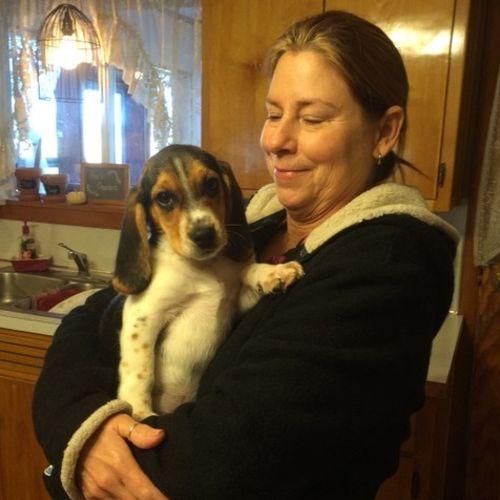 Pet Care Job Laura Chennilaro's Profile Picture