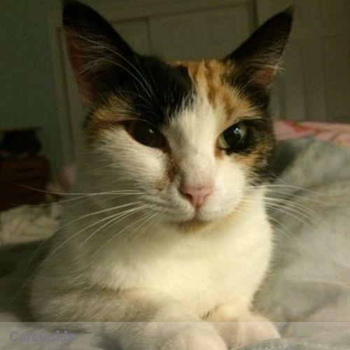 Pet Care Job Sondra Antonio's Profile Picture