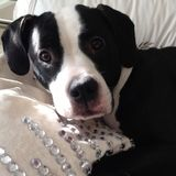 Caregiver for recently paralyzed dog wanted