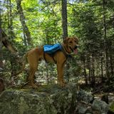 Animal-Lover Pet sitter/Dog walker wanted!