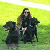 Dog Walker in Arvada