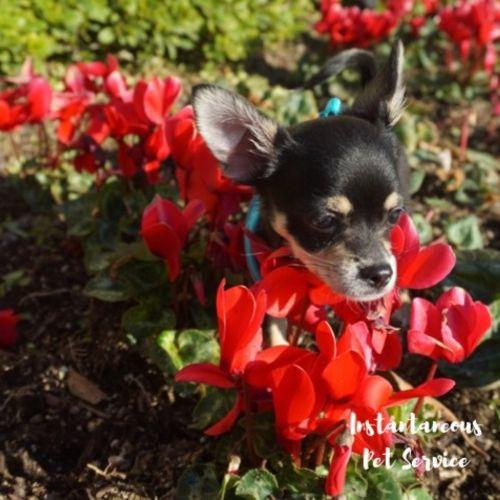 Pet Care Provider Renea D's Profile Picture