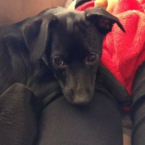 Pet Care Job Maria Briscoe's Profile Picture