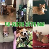 The Critter Sitter Offers