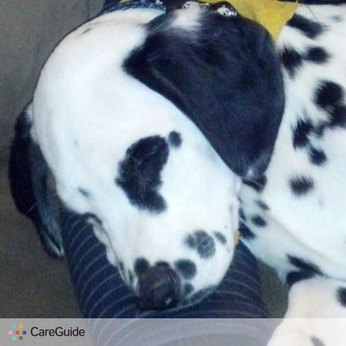 Pet Care Provider Andrew Rivera's Profile Picture