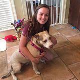 Allen/Plano/McKinney Pet Sitter Seeking Being Hired in Texas