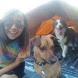 Dog Walker, Pet Sitter in Canton