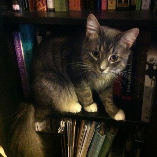 Pet Care Job Charlie McGrath's Profile Picture