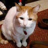Searching for Rome Pet Supervisor, New York Jobs