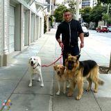 Runaround Hound Dog Walking Service