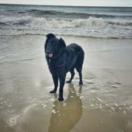 Pet Care Job Victoria S's Profile Picture