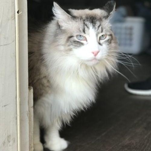 Pet Care Job Lucia Mazzone Gallery Image 1