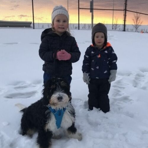 Help with two young kids and puppy