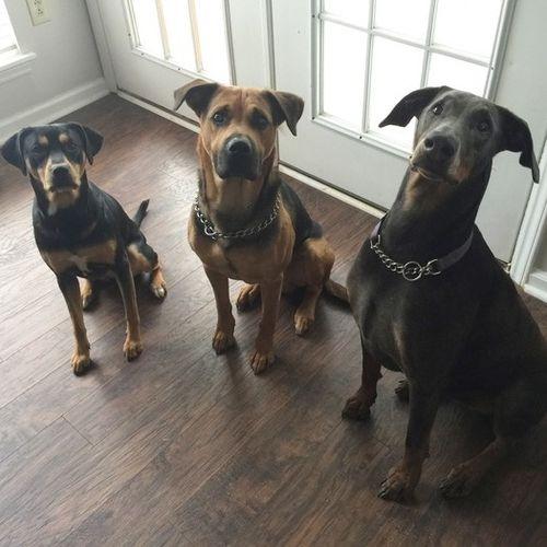 Pet Care Provider Kayla Styles Gallery Image 3