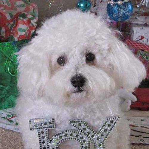 Pet Care Job Shaun L's Profile Picture