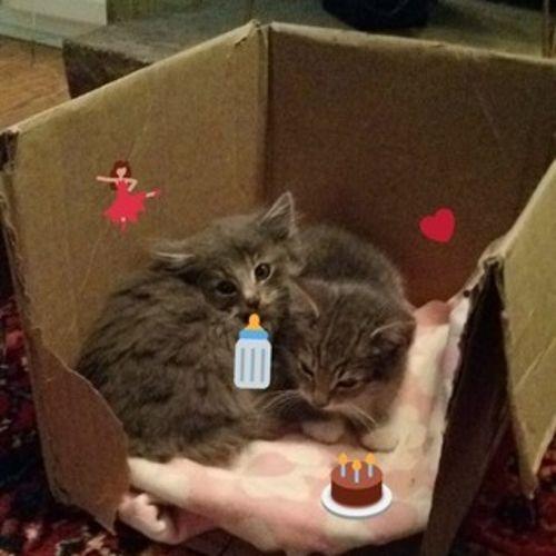 Pet Care Provider Chloe C Gallery Image 1