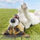 Dog Walker, Pet Sitter, Kennel in Ashland