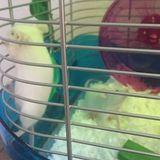 Mice sitting Wanted in Corona