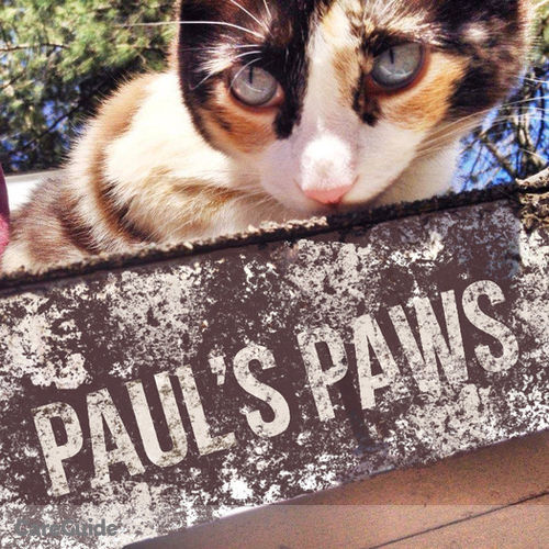 Pet Care Provider Paul's Paws's Profile Picture