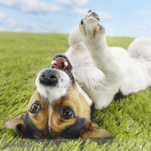 Pet Care Provider C Z's Profile Picture