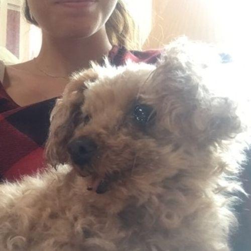 Pet Care Provider Haley Reynoldson Gallery Image 2