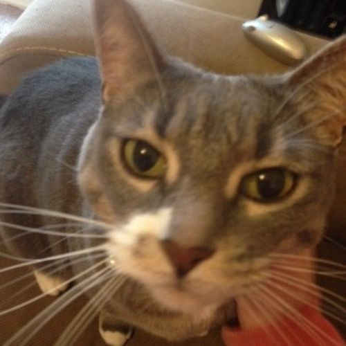 Pet Care Provider Claudia O's Profile Picture