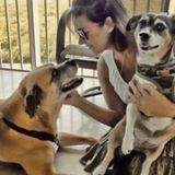 Dog walker and all pets cared for at your home