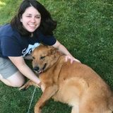Troy Pet Sitter Interested In Being Hired in New York