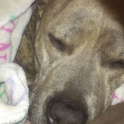 Pet Care Provider Anna Morse Gallery Image 1
