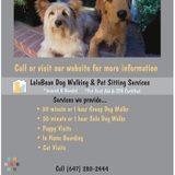 Dog Walker, Pet Sitter, Kennel in Toronto