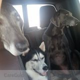 In home dog sitter for 3 dogs in Odessa