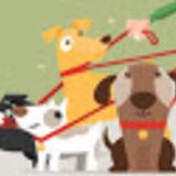 Pet Care Provider in McKinney, Texas