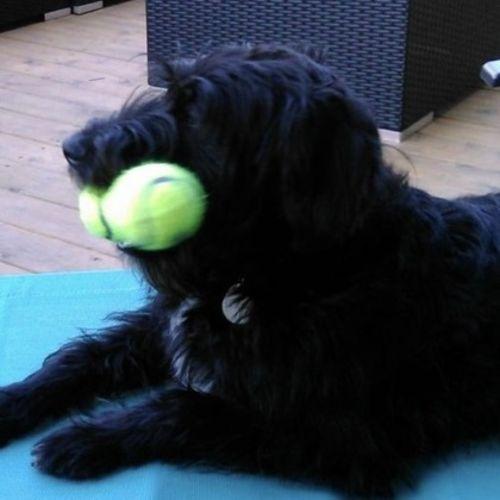 Pet Care Provider Marti P's Profile Picture