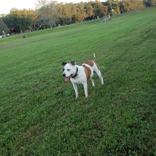 Skilled Pet Sitting in Zephyrhills lots of cuddles and love!