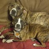 Seeking pet sitting job opportunity in Valdosta, Georgia. I am a caring patient animal lover.