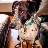 3/9-11 Need sitter with no other dogs