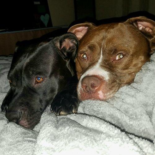 Pet Care Provider Megan Baker Gallery Image 3