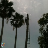Landscaper in Fort Lauderdale