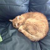 Woodbridge Pet Sitting Opportunity for Loving Cat