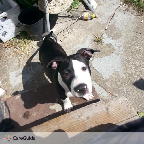 Pet Care Provider Elizabeth O's Profile Picture