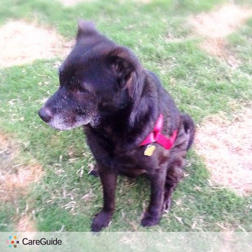 Pet Care Provider Brenda Nabuco's Profile Picture