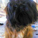 Dog Walker, Pet Sitter in Birmingham