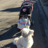 Dog Walker, Pet Sitter in Salt Lake City