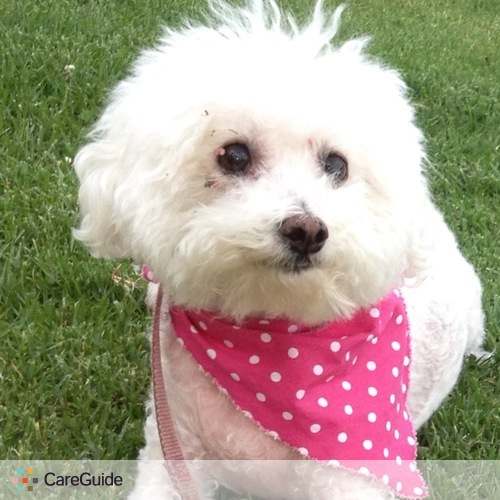 Pet Care Provider Diane Kephart's Profile Picture