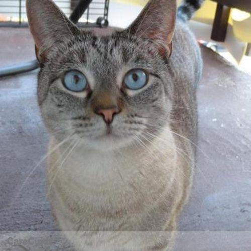 Pet Care Job Jennifer Forster's Profile Picture