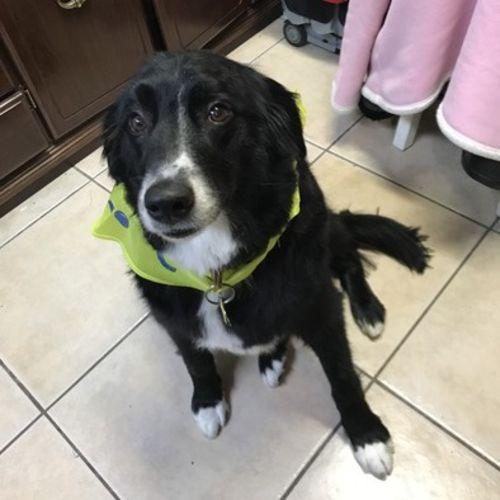 Pet Care Job Drew D's Profile Picture