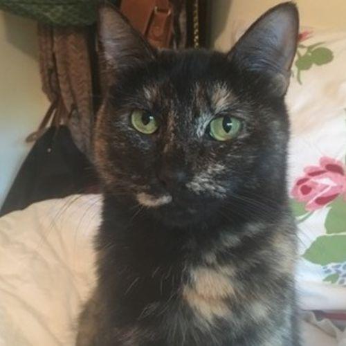 Pet Care Job Jennifer B's Profile Picture
