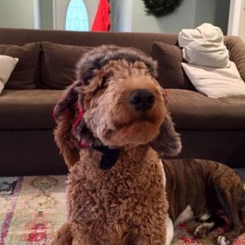 Pet Care Job Joanne Glowacki's Profile Picture